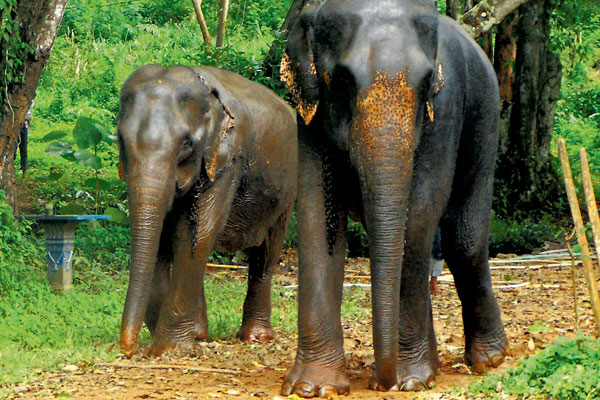 Tui and World Animal Protection back elephant protection programme