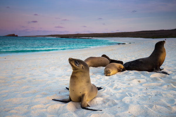 Mystery shopper: Online, a responsible tour of the Galapagos Islands