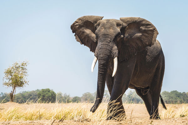 Zambia and Zimbabwe: top safari picks