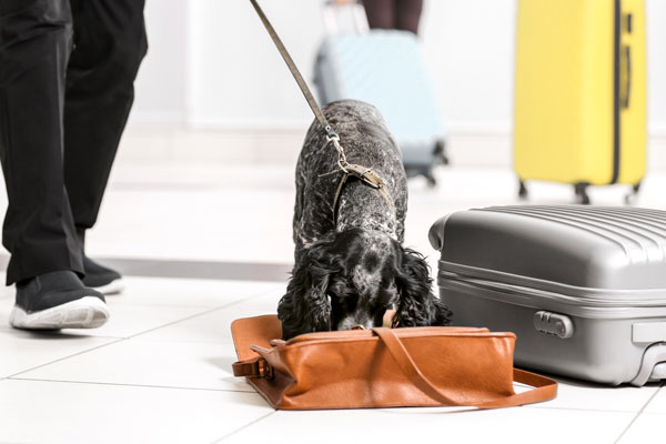 Flights grounded and delayed after airport sniffer dog runs off