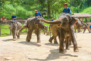 Travel firms pressed to ditch 'cruel' elephant shows