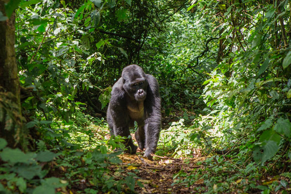 Saga adds Himalaya trekking and mountain gorilla spotting tours