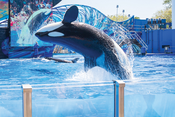Thomas Cook decision to stop selling SeaWorld 'misguided'