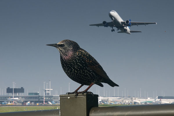Bird strike delays 'not extraordinary' says advocate general