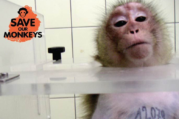 Mauritius campaign calls for monkey experiments to finish