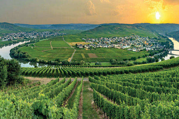 Cruises in Germany's wine regions