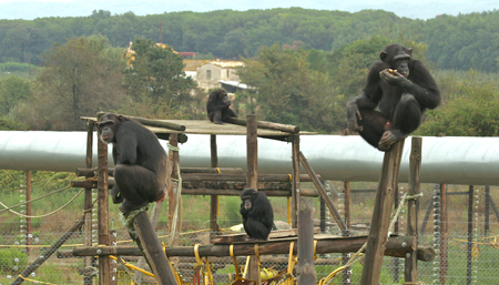 Experience holidays: Chimp rescue; volunteering; gladiator school