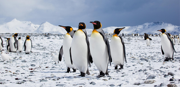 Active & adventure holidays: Penguins or polar bears?